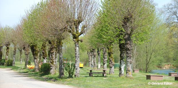 slide_arbres